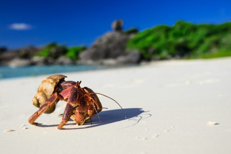 Hermit Crabs  – Moving On up!